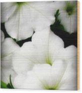 White Petunias 2 Wood Print