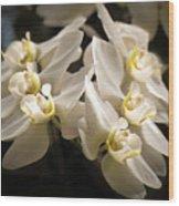 White Phalaenopsis Blossom Wood Print