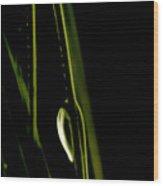 White Pine Dew Wood Print