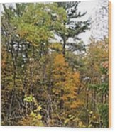 White Pine Hollow State Forest Wood Print