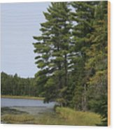 White Pines Wood Print