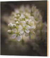White Plum Blossom- 2 Wood Print