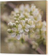 White Plum Blossom Wood Print