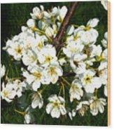White Plum Blossoms Wood Print