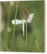 White Plume Moth, Wood Print