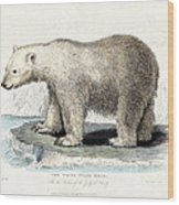 White Polar Bear On Ice Floe Wood Print
