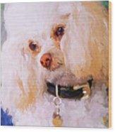 White Poodle Wood Print
