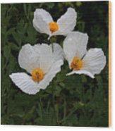 White Poppy In Cube Wood Print