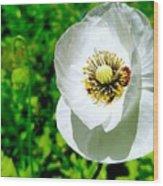 White Poppy Wood Print