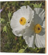White Poppy Twins Wood Print