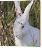 White Rabbit Wood Print