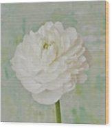 White Ranunculus Wood Print