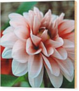 White Red Flower Wood Print by Jame Hayes