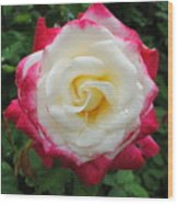 White Red Rose Wood Print