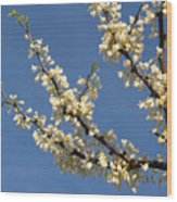 White Redbud Branch In May Wood Print