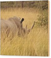White Rhino Wood Print