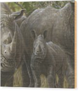 White Rhino Family - The Face That Only A Mother Could Love Wood Print