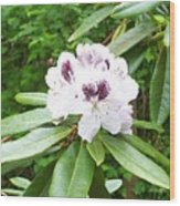 White Rhodie Wood Print