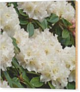 White Rhodies Landscape Floral Art Prints Canvas Baslee Troutman Wood Print