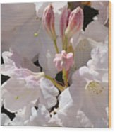 White Rhodies Pink Rhododendrons Flowers Art Prints Canvas Botanical Baslee Troutman Wood Print