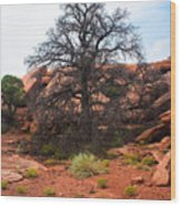 White Rim Overlook Trail Tree Wood Print