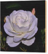 White Rose 006 Wood Print