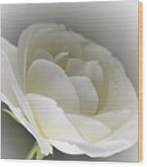 white Rose -1- Wood Print by Issabild -
