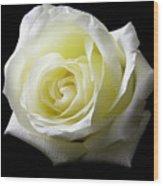 White Rose-11 Wood Print