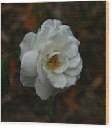 White Rose 209 Wood Print