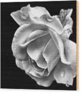 White Rose Aglow Wood Print