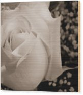 White Rose Bw Fine Art Photography Print Wood Print
