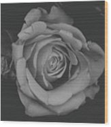 White Rose In Black And White Wood Print