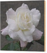 White Rose In Rain - 3 Wood Print