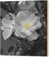 White Rose Wood Print