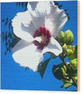White Rose Of Sharon Hanging Out In The Sky Wood Print