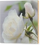 white Roses -2- Wood Print by Issabild -