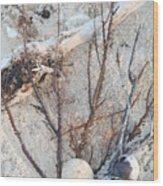 White Sand Beach Finds Wood Print