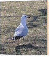 White Seagull Wood Print