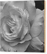 White Simplicity Rose Macro Wood Print
