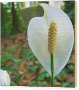 White Single Flower Wood Print