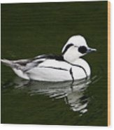 White Smew  Duck On Silver Pond Wood Print