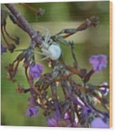 White Spider In Butterfly Bush Wood Print