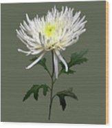 White Spider Mum Wood Print