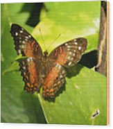 White Spotted Butterfly Wood Print