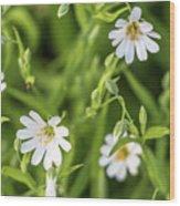 White Spring Flowers Wood Print