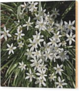 White Spring Flowers Wood Print