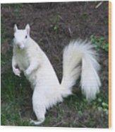 White Squirrel Wood Print
