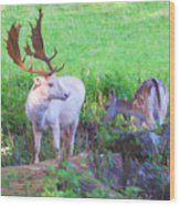 White Stag And Hind 2 Wood Print