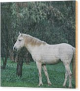 White Stallion In The Woods  Wood Print