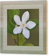 White Star Flower Wood Print